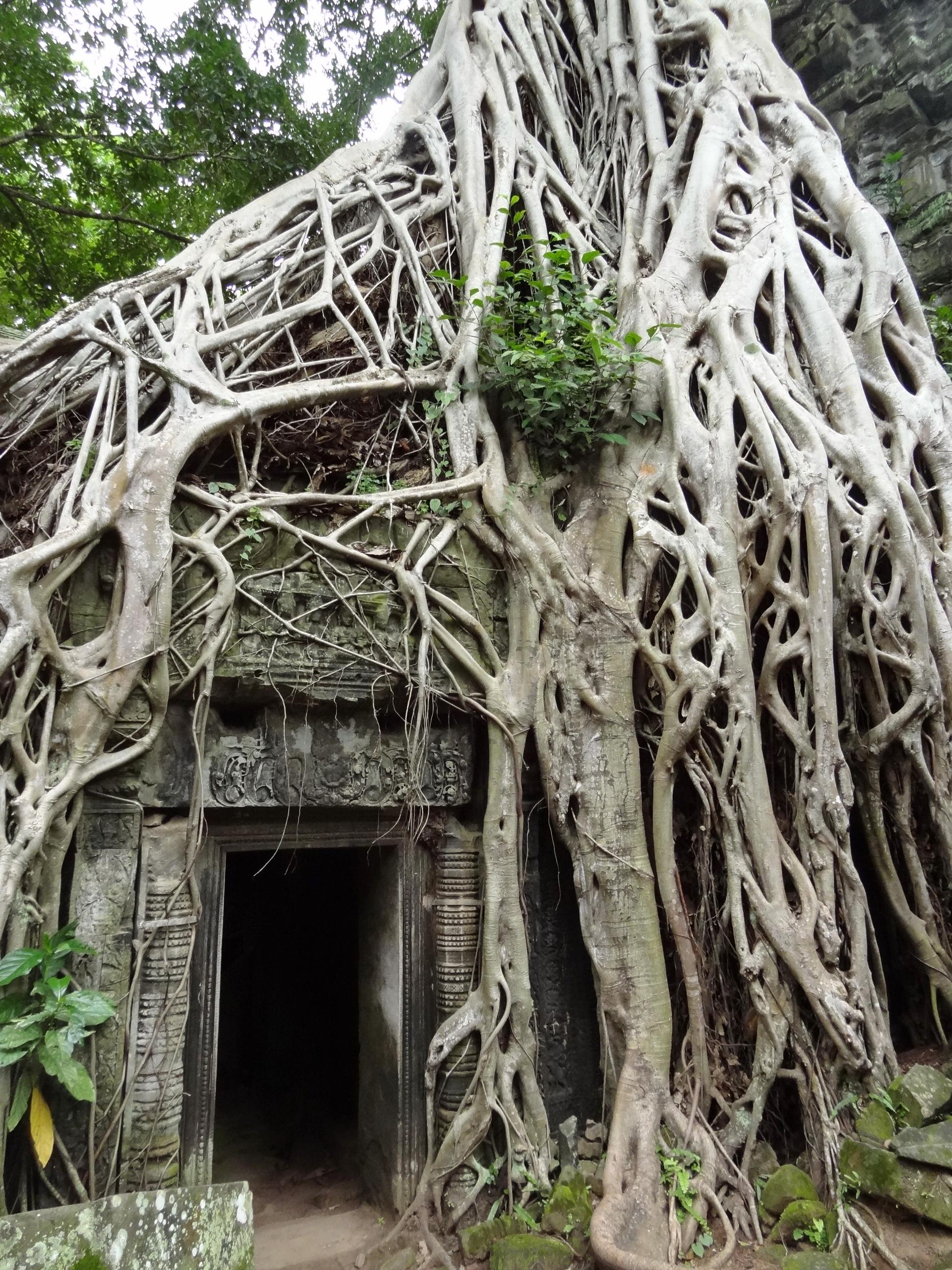 Cambodia Ta Phrom