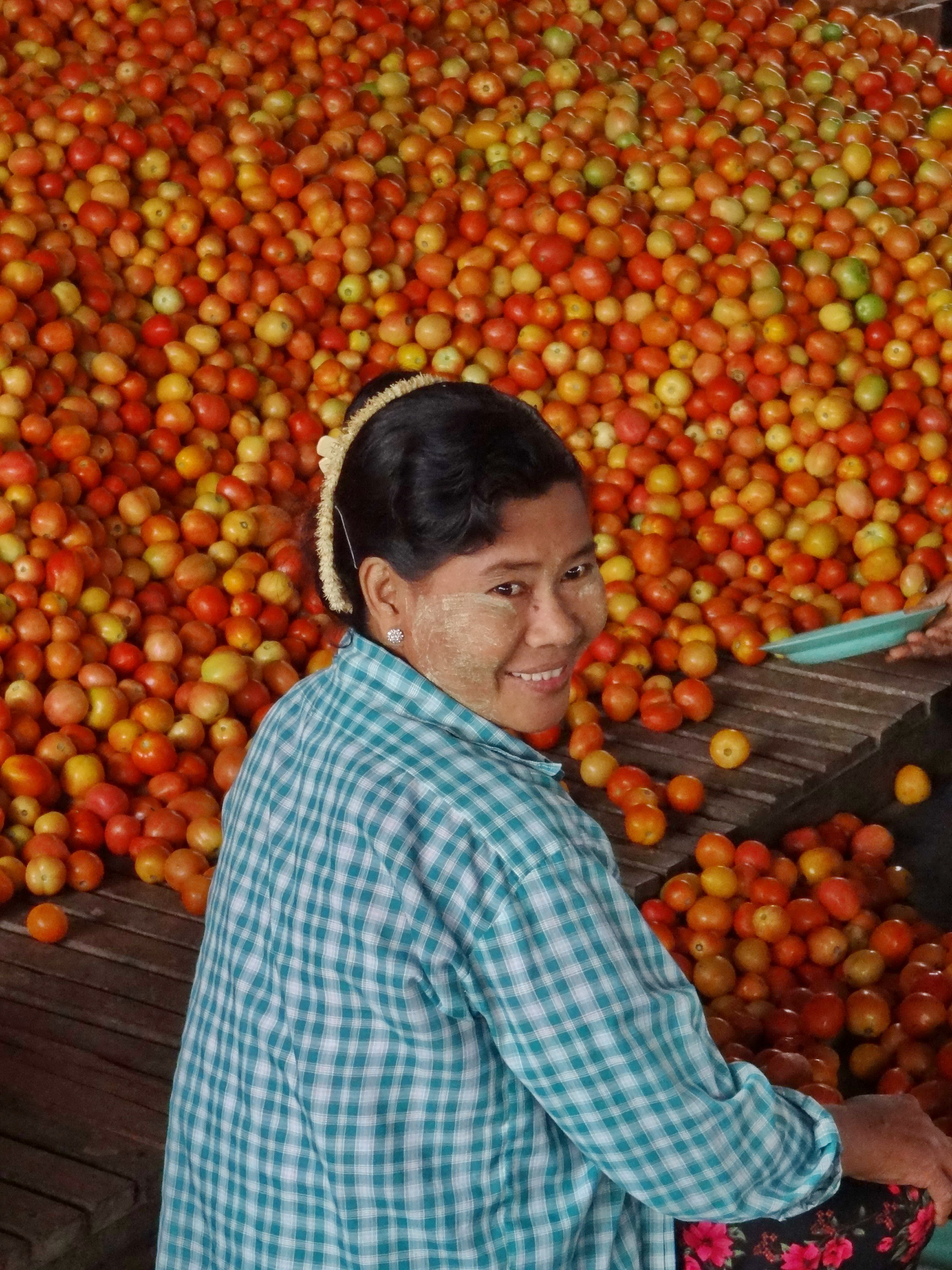 Myanmar Tomatoes