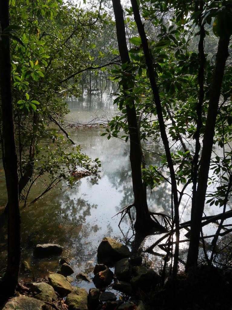 Pulau Ubin Forest