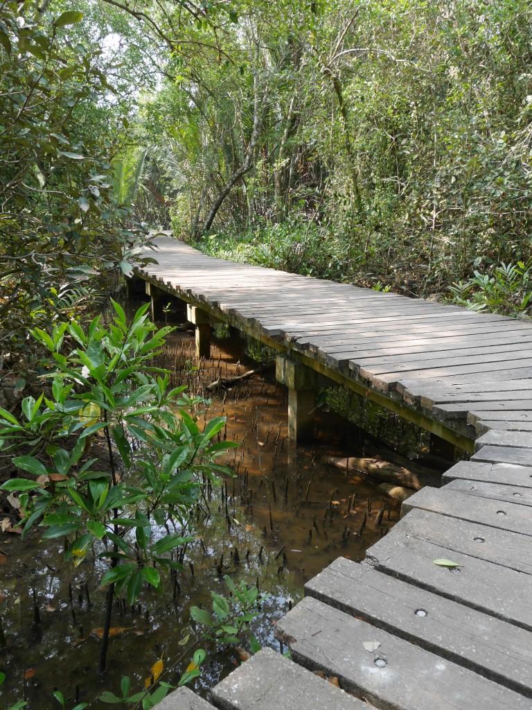 Pulau Ubin Mangrove Walk