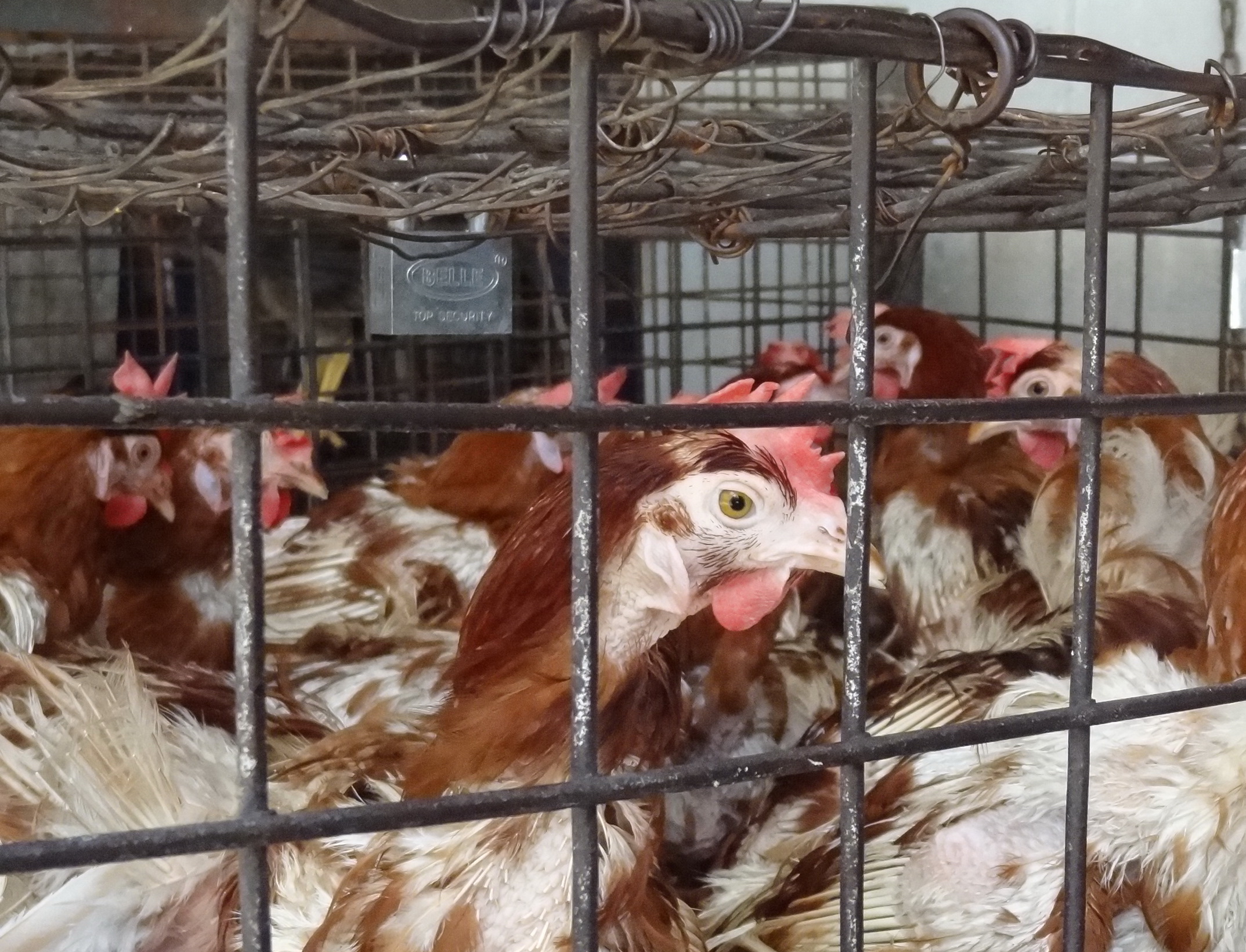 Georgetown Chicken