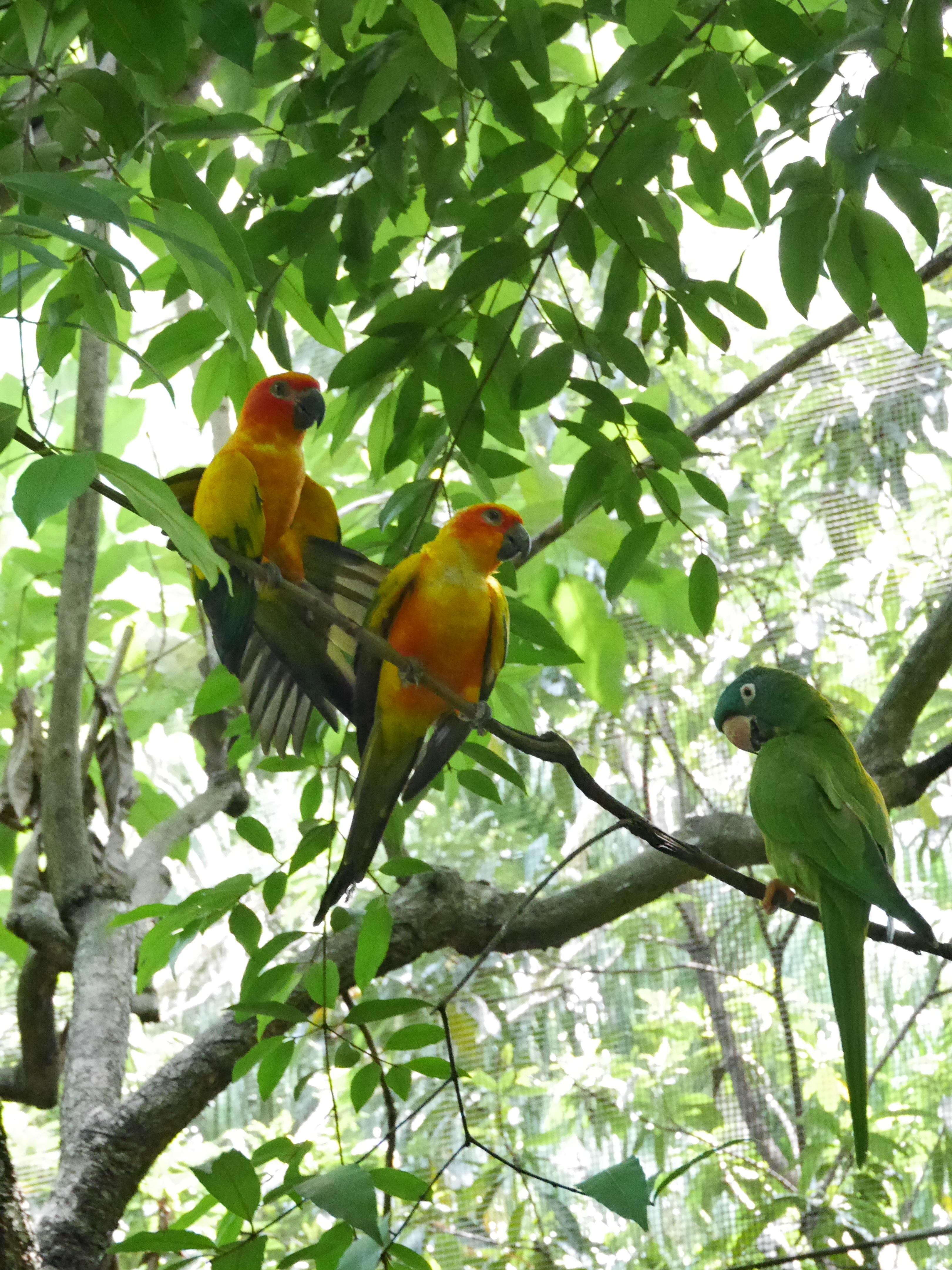 Singapore Bird Park (3)