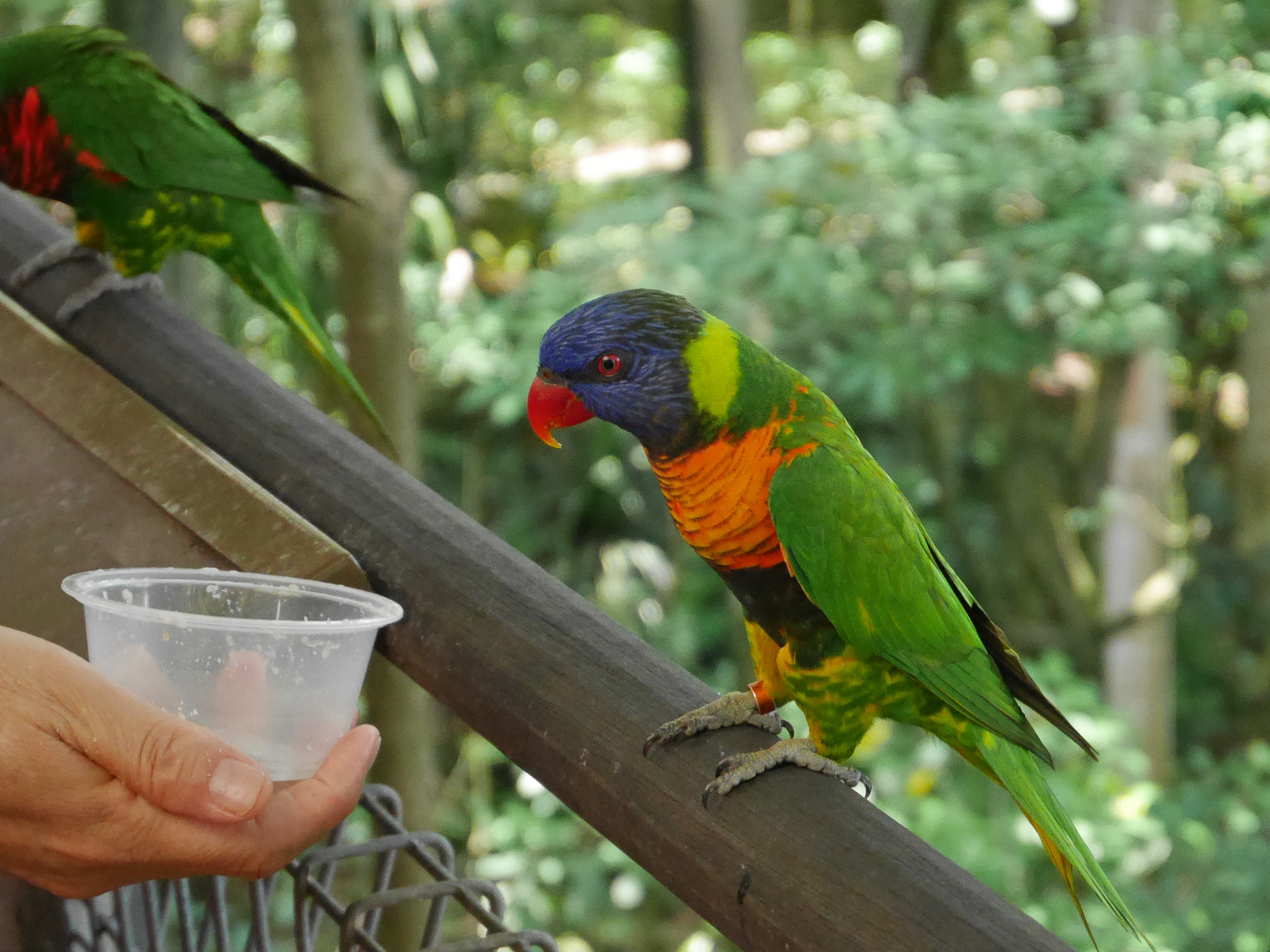 Singapore Bird Park (4)
