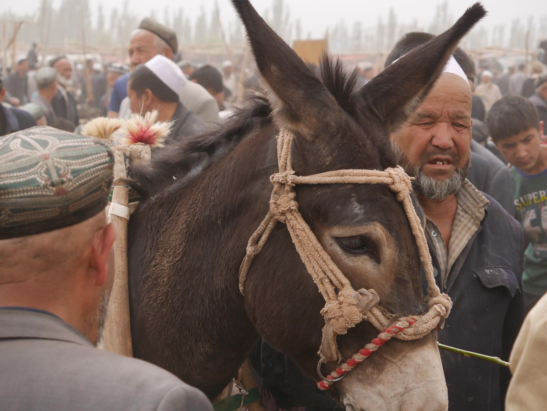 Xinjiang Donkey_resize
