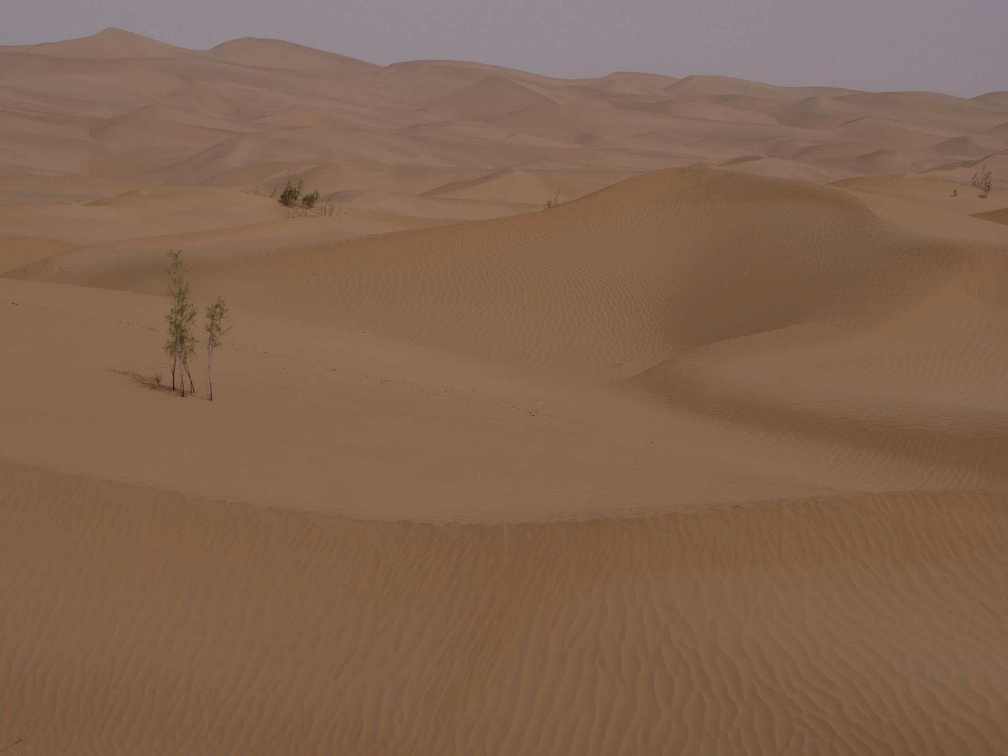 Xinjiang Dunes_resize
