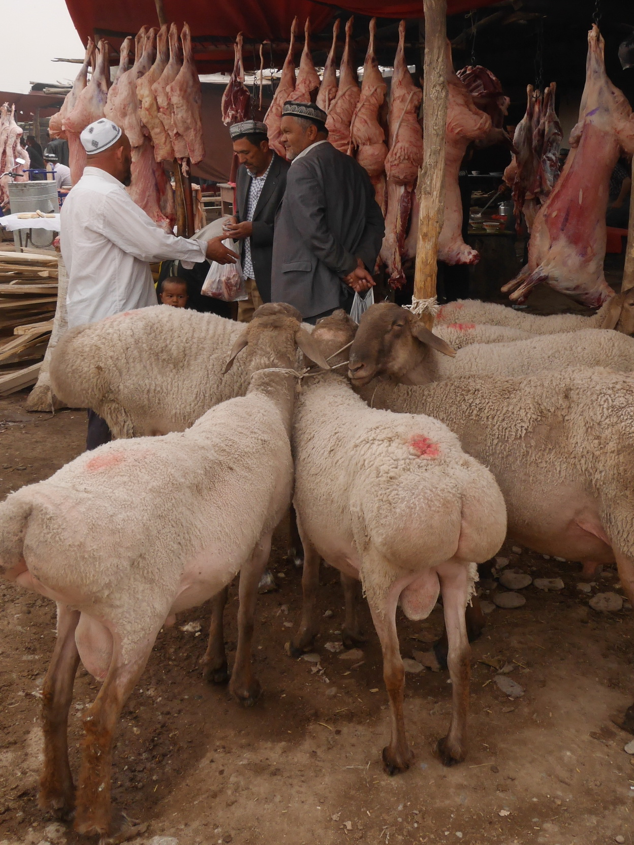 Xinjiang Sheep Market_resize