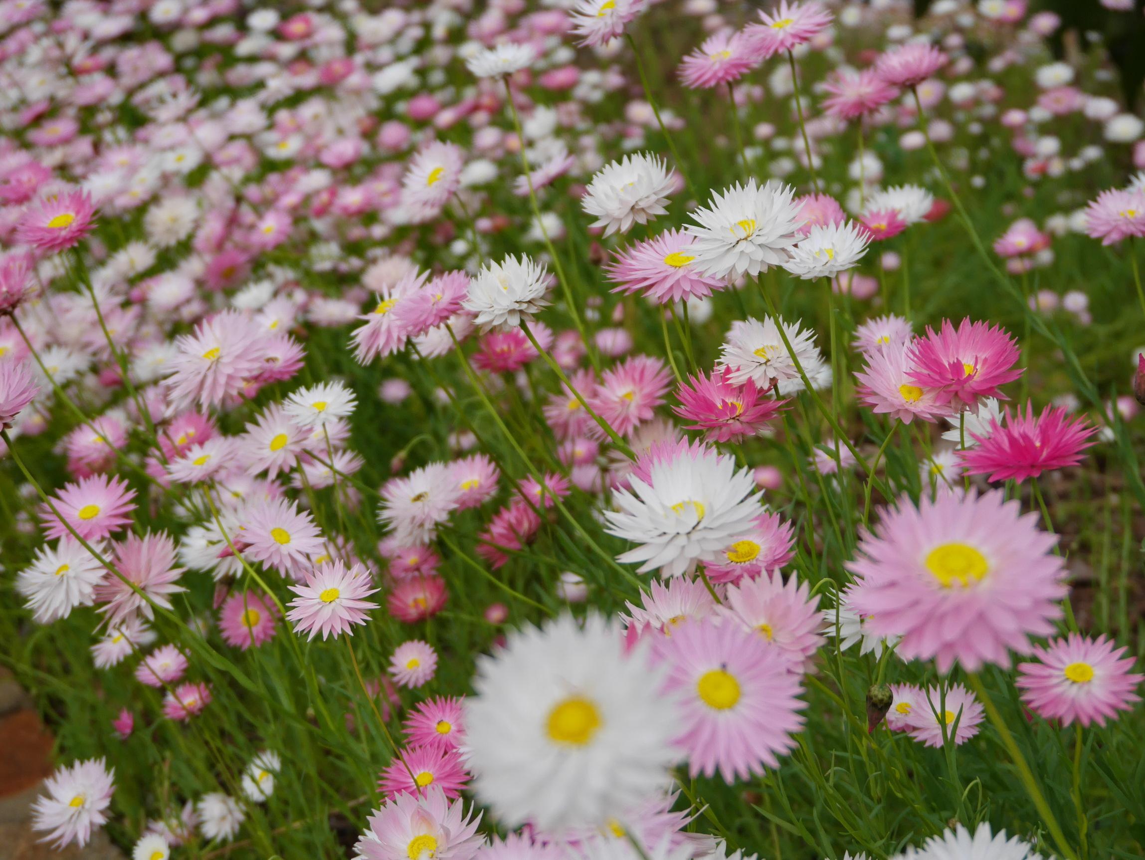 Australia Perth Flowers